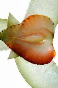 Fruit Lightning-7
